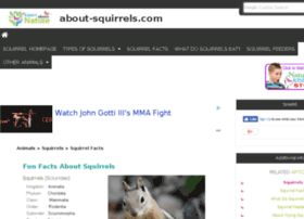 about-squirrels.com