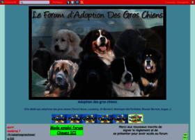 adoptiongroschiens.forumsactifs.com