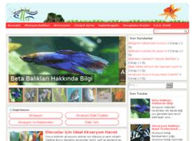 akvaryumcenneti.com