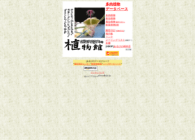 albino.sub.jp