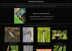 americaninsects.net