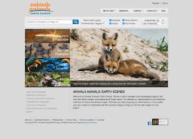 animalsanimals.com