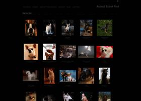 animaltalentpool.photoshelter.com
