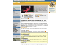 arizonabirds.com
