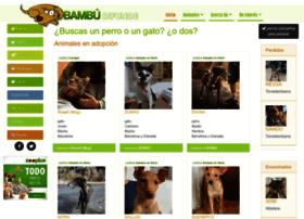 bambu-difunde.net