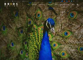 bbdsdesign.com