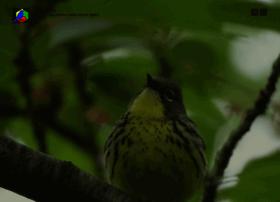 birding.com