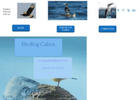 birdingcabos.com