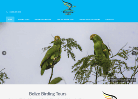 birdwatchingbelize.com