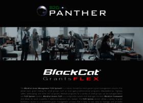 blackcatgrants.com
