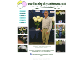 blooming-chrysanthemums.co.uk