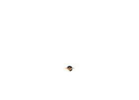 bluechipflightschool.co.za