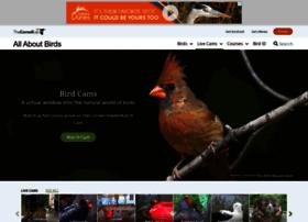 cams.allaboutbirds.org