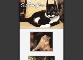 catoverflow.com
