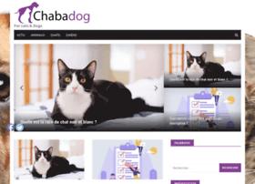 chabadog.com