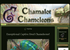 chamalotchameleons.com