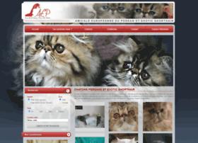 chatons-persans.com