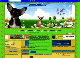 chihuahua-is-love.forumattivo.it