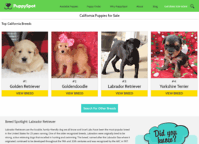 chihuahua.californiapuppiesforsale.com