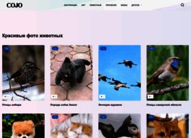 cojo.ru
