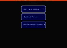 d-torso.jp