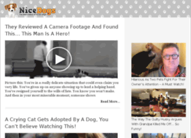 dogs.nicedogs.tv