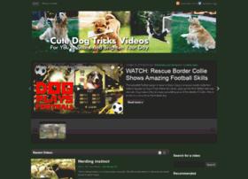 dogtricksvideos.com