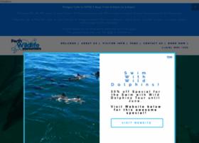 dolphins.com.au