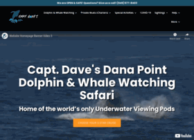 dolphinsafari.com