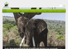 elephanaticsdotorg.wordpress.com