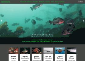 emeralddiving.com
