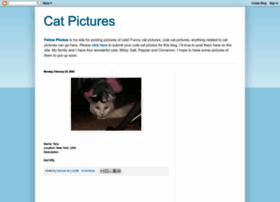 felinephotos.blogspot.com