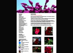 floricele.wordpress.com