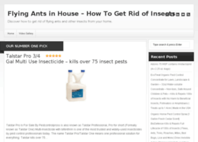 flyingantsinhouse.com