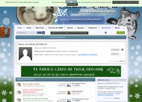 forum-szynszyla.pl