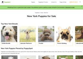frenchbulldog.newyorkpuppiesforsale.com