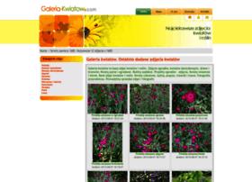 galeria-kwiatow.com