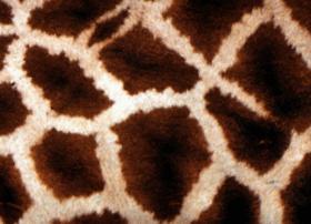 giraffesocialenterprises.org.uk