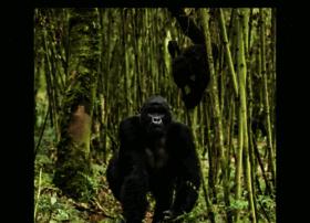 gorillasafarisandtours.wordpress.com