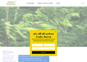 healingmoringatree.com