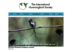 hummingbirdsociety.org
