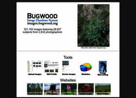 images.bugwood.org