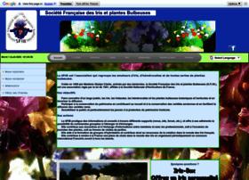 iris-bulbeuses.org