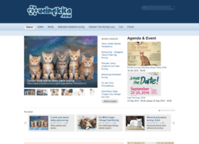 kucingkita.com