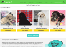 labradoodle.californiapuppiesforsale.com
