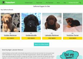 labrador.californiapuppiesforsale.com