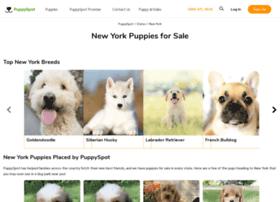 labrador.newyorkpuppiesforsale.com