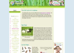 ladybug-life-cycle.com
