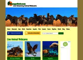 mangolinkcam.com