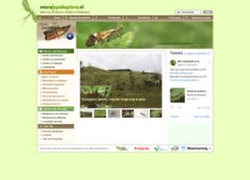 microlepidoptera.nl